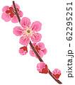 紅梅の枝 62295251