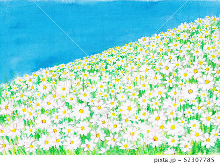 マーガレットのお花畑 62307785