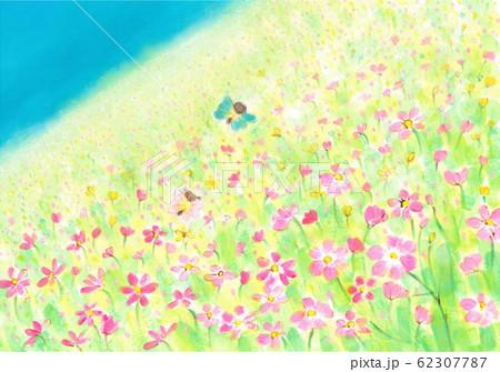 コスモス畑とちょうちょの妖精 62307787