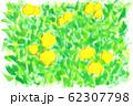 みかん畑 62307798