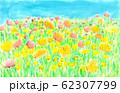 オレンジと黄色のポピー 畑 62307799