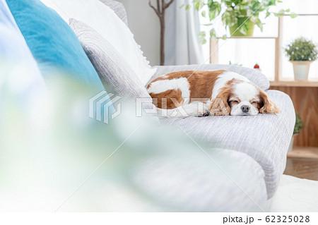 犬 お昼寝 62325028