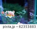 ピンクのバラ 62353883