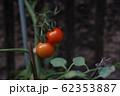 ミニトマト 62353887