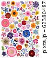 多彩な押し花100種類 62380487