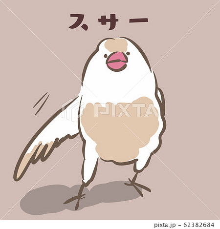 文鳥 クリーム