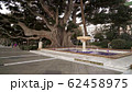 Gimbal shot of working fountain near a tree on Cadiz quay with people 62458975