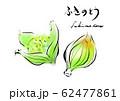 ふきのとう 手描き 日本画風 62477861