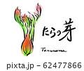 たらの芽 手描き 日本画風 62477866
