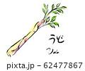 ウド 手描き 日本画風 62477867