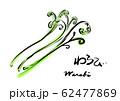 ワラビ 手描き 日本画風 62477869