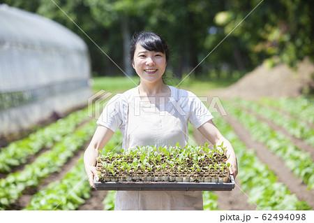 畑で苗を持つ女性 62494098