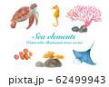 海のいきもの色々(ウミガメ、マンタ、カクレクマノミ、タツノオトシゴ、サンゴ) 水彩イラストのトレース 62499943