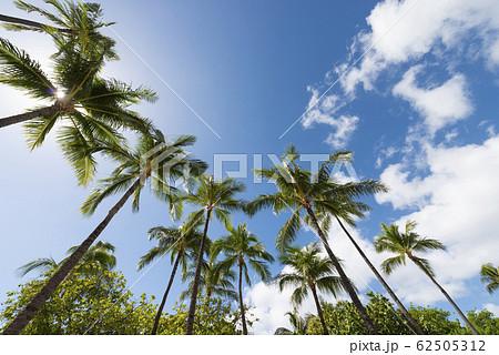 椰子の木と青空 perming ハワイの風景 写真素材 62505312