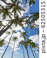 椰子の木と青空 perming ハワイの風景 写真素材 62505315