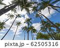 椰子の木と青空 perming ハワイの風景 写真素材 62505316