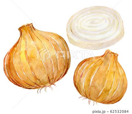 水彩イラスト 食品 食べ物 玉ねぎ 62532084