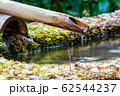 京都・青蓮院 鹿威しと苔 62544237