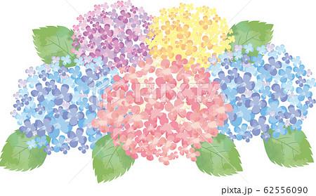 紫陽花 花 6月 梅雨 紫陽花 あじさい 和風 背景 ワンポイントのイラスト素材