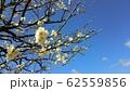 梅の花 62559856