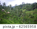 View of young watered ricefield in Bali island 62565958