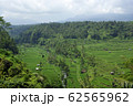 Ricefields with coconut palms and irrigation system 62565962