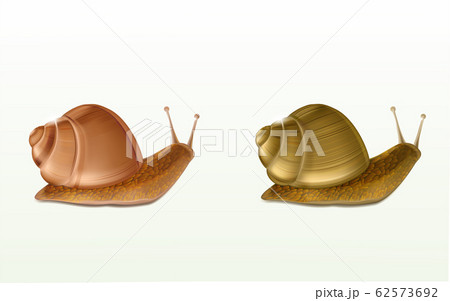 Land snails realistic isolated icons 62573692