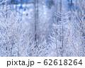 《北海道》霧氷とダイヤモンドダスト・冬の美瑛 62618264