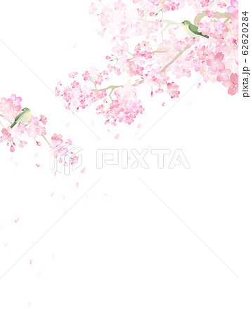 背景-和-和紙-和風-和柄-春-桜-枝-メジロ 62620284