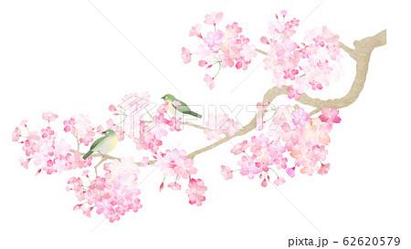 素材-パーツ-桜-枝-メジロ-春-和-和風-和柄-和紙-日本 62620579