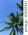 フィリピン パンゴラオ 青空バックのヤシの木 62630941
