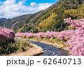 (静岡県-風景)山並みと川沿いの河津さくら1 62640713