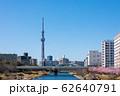 (東京都-都市風景)春の旧中川から見るスカイツリー3 62640791