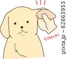ゴールデンレトリバーの子犬(耳をチェック) 62663953