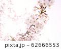 春イメージ 62666553