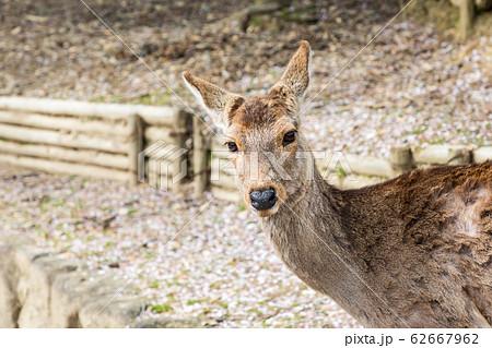 浅茅ヶ原 奈良公園 62667962