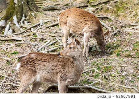 浅茅ヶ原 奈良公園 62667991