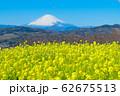 吾妻山公園 満開の菜の花と富士山 62675513