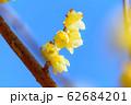 宝登山ロウバイ園【埼玉県長瀞町】 62684201
