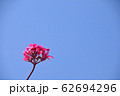 プルメリア 62694296