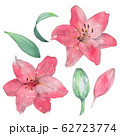 Set of isolated lilies to create a design 3. Watercolor illustration. Hand drawing 62723774