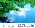 新緑のイロハモミジと庭園の池 62731140