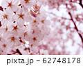 桜 62748178