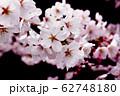桜 62748180