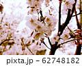桜 62748182