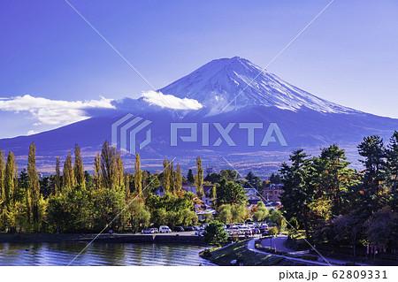 (山梨県)河口湖・大池公園のポプラ紅葉と富士山 62809331