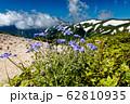 飯豊山稜線のマツムシソウと残雪の山並み 62810935