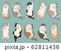 ごろ寝する様々な種類の猫 62811436