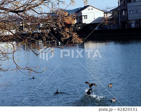 センダンと江ノ口川と鳥たち 62820531