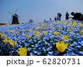 花博記念公園鶴見緑地のネモフィラ 62820731